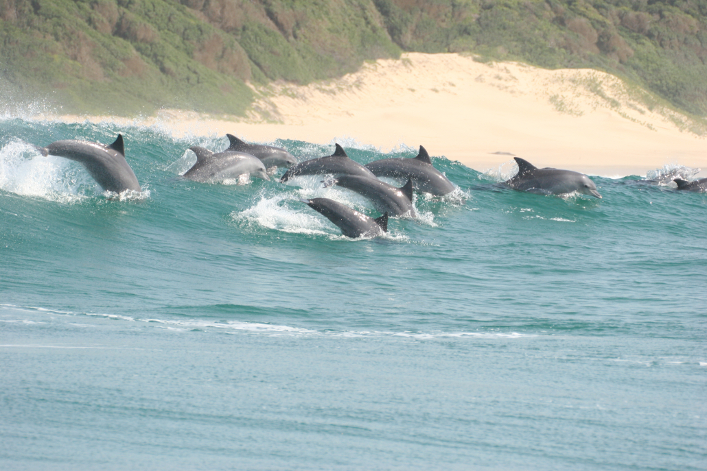 Swim with dolphins in Ponta d' Ouro