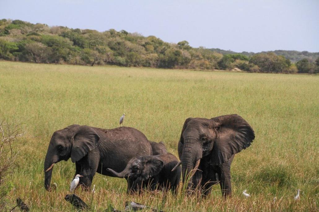 Maputo Elephant Reserve shows a herd of elephants