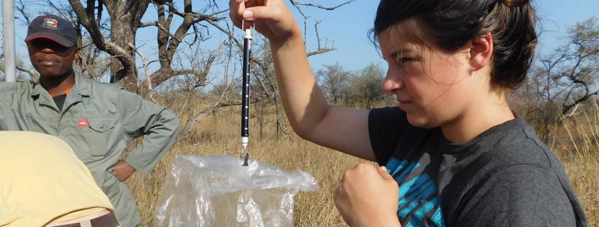 Eswatini - Savannah Conservation