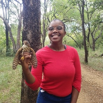 A researcher after catching a Little Sparrowhawk at The Mbuluzi Game Reserve.